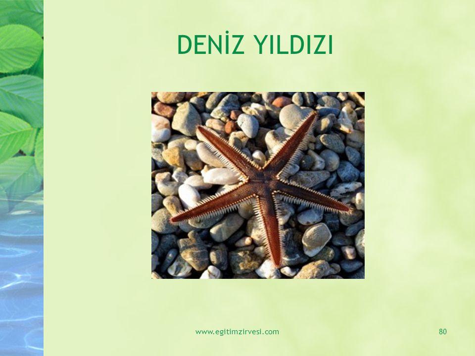 DENİZ YILDIZI www.egitimzirvesi.com80
