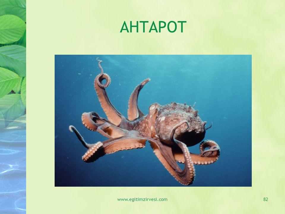 AHTAPOT www.egitimzirvesi.com82