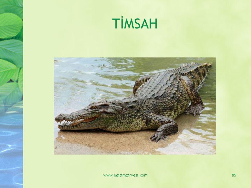 TİMSAH www.egitimzirvesi.com85