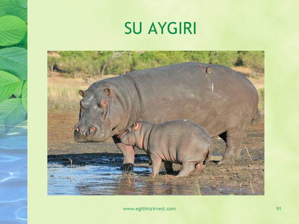 SU AYGIRI www.egitimzirvesi.com91