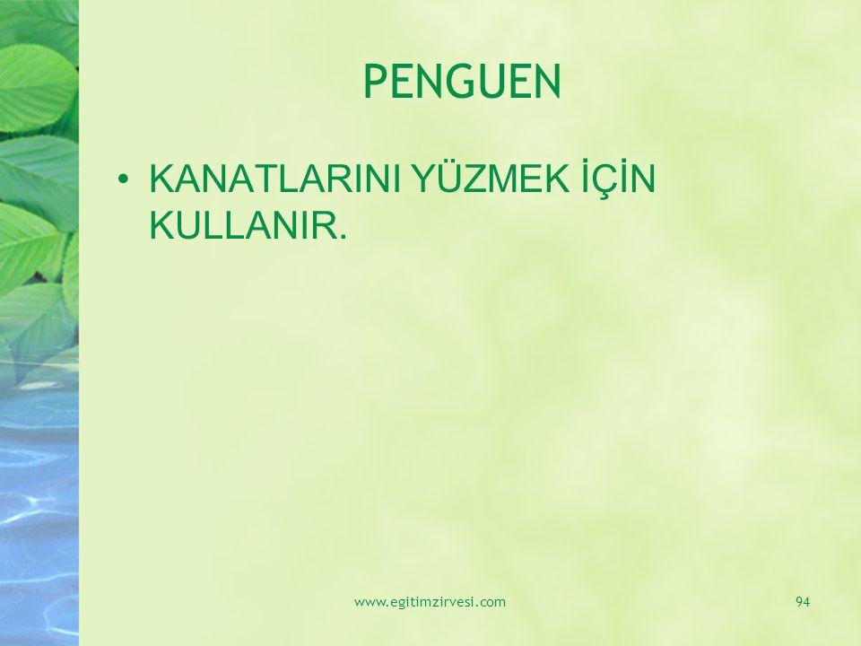 PENGUEN KANATLARINI YÜZMEK İÇİN KULLANIR. www.egitimzirvesi.com94