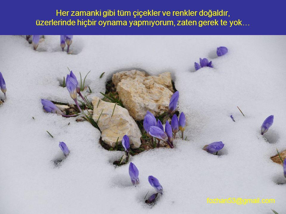 Her zamanki gibi tüm çiçekler ve renkler doğaldır, üzerlerinde hiçbir oynama yapmıyorum, zaten gerek te yok… fozhan53@gmail.com