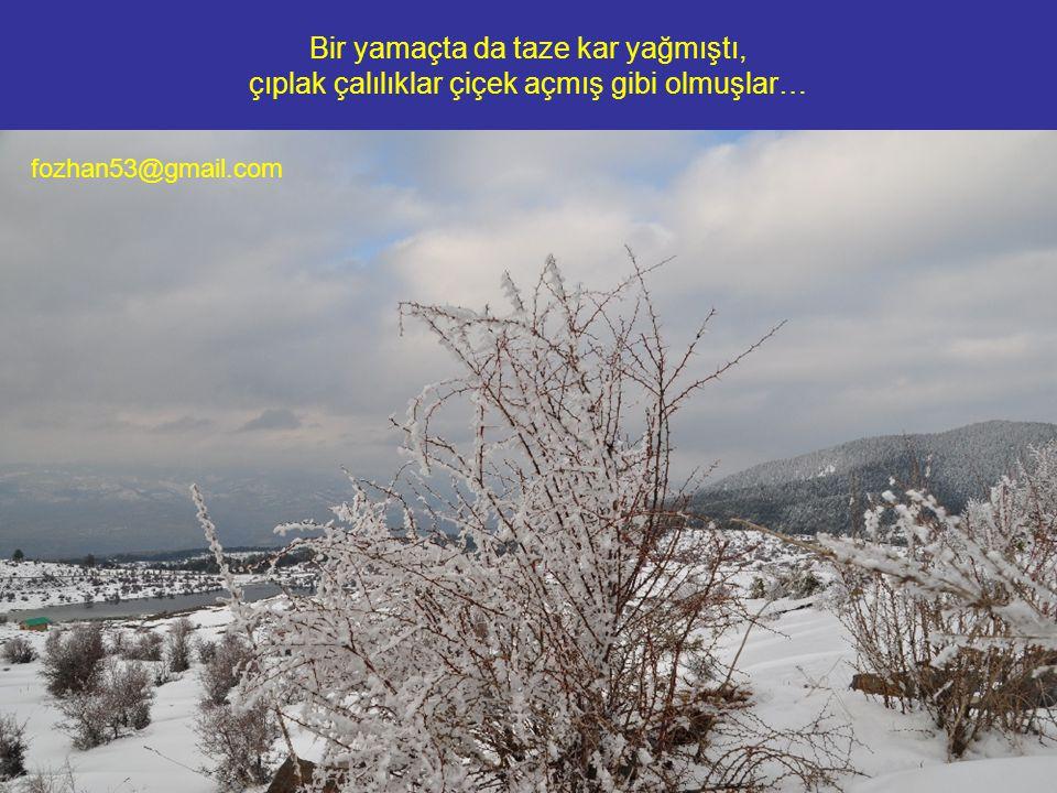 Bir yamaçta da taze kar yağmıştı, çıplak çalılıklar çiçek açmış gibi olmuşlar… fozhan53@gmail.com
