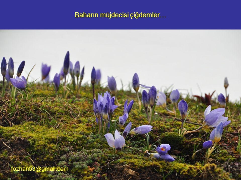 İşte bir başka kayalığın renkli yosun ve çiçek örtüsü. fozhan53@gmail.com