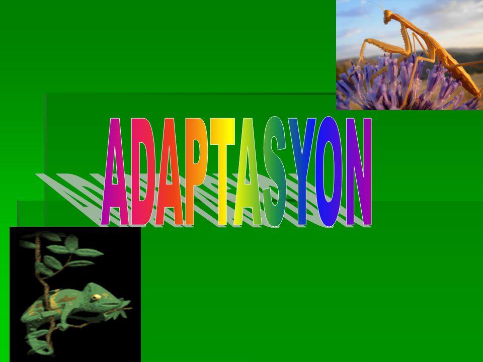 Evrim : Canlı türlerinde görülen ve jeolojik zamanın ilk dilimlerinden başlayarak günümüzde de devam eden değişimlere evrim adı verilir