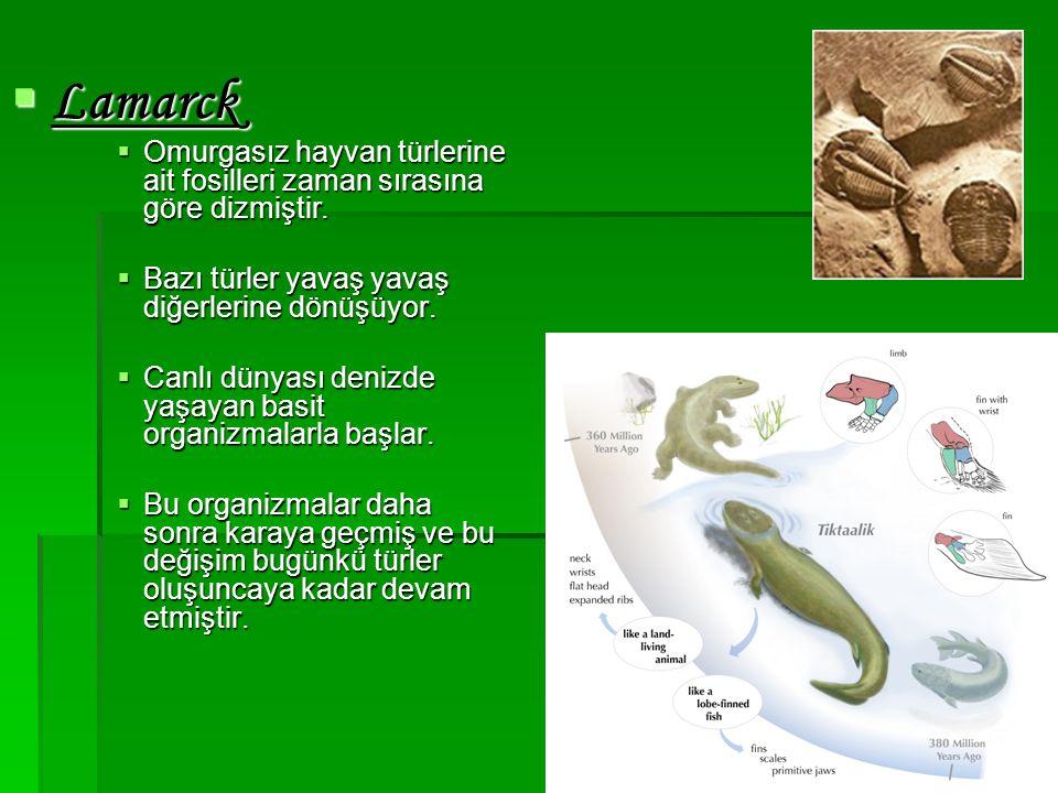  Lamarck  Omurgasız hayvan türlerine ait fosilleri zaman sırasına göre dizmiştir.  Bazı türler yavaş yavaş diğerlerine dönüşüyor.  Canlı dünyası d