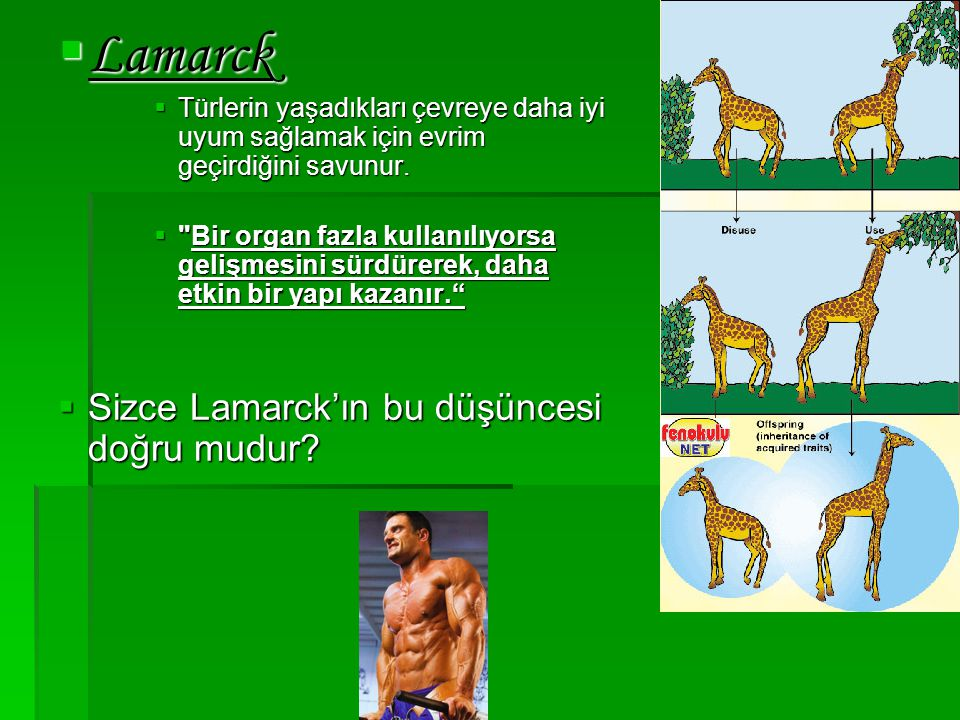  Lamarck  Türlerin yaşadıkları çevreye daha iyi uyum sağlamak için evrim geçirdiğini savunur. 