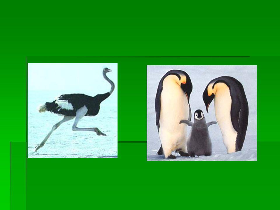 Aynı ekosistemde yaşayan canlılar hayatta kalmak için benzer adaptasyonlar geliştirir mi?