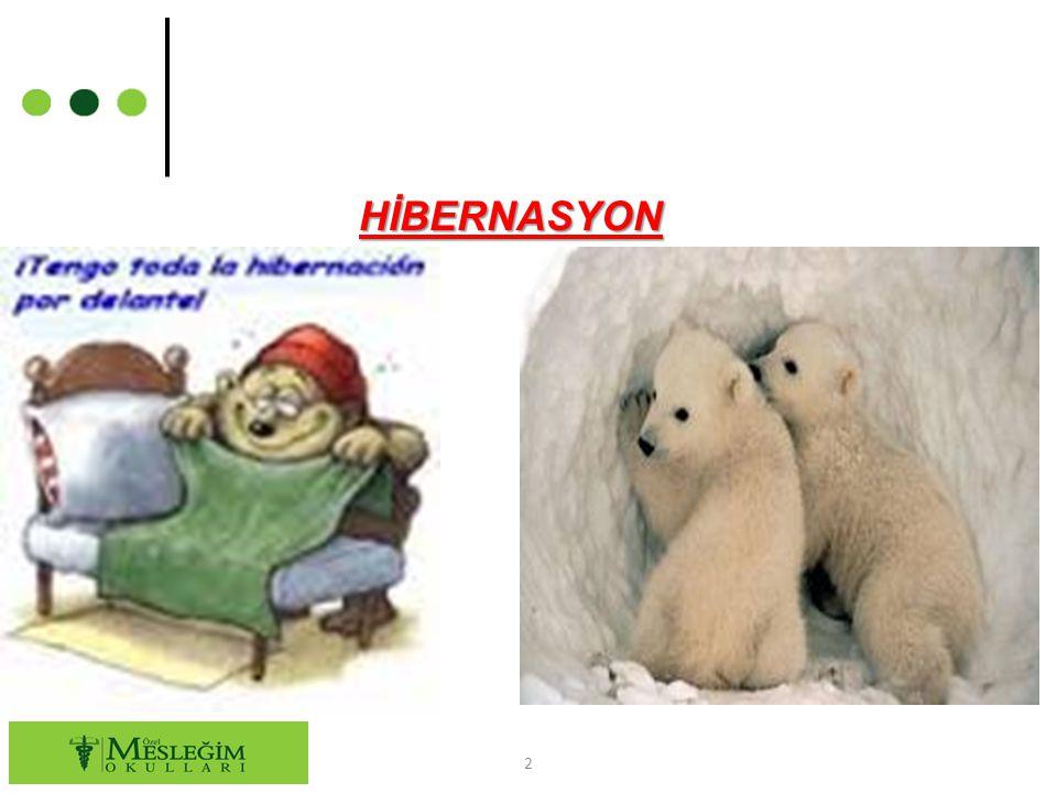 HİBERNASYON 2
