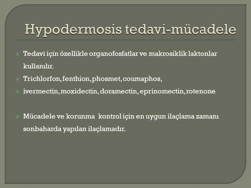  Tedavi için özellikle organofosfatlar ve makrosiklik laktonlar kullanılır.  Trichlorfon, fenthion, phosmet, coumaphos,  ivermectin, moxidectin, do