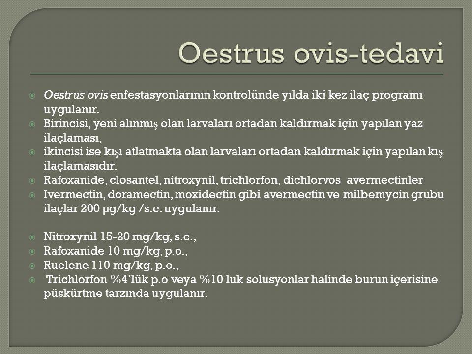  Oestrus ovis enfestasyonlarının kontrolünde yılda iki kez ilaç programı uygulanır.  Birincisi, yeni alınmı ş olan larvaları ortadan kaldırmak için