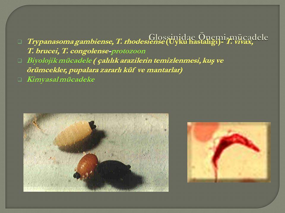  Trypanasoma gambiense, T. rhodesiense (Uyku hastalığı)- T. vivax, T. brucei, T. congolense-protozoon  Biyolojik mücadele ( çalılık arazilerin temiz