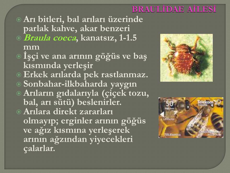  Arı bitleri, bal arıları üzerinde parlak kahve, akar benzeri  Braula coeca, kanatsız, 1-1.5 mm  İşçi ve ana arının göğüs ve baş kısmında yerleşir