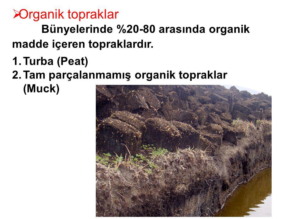  Organik topraklar Bünyelerinde %20-80 arasında organik madde içeren topraklardır. 1.Turba (Peat) 2.Tam parçalanmamış organik topraklar (Muck)