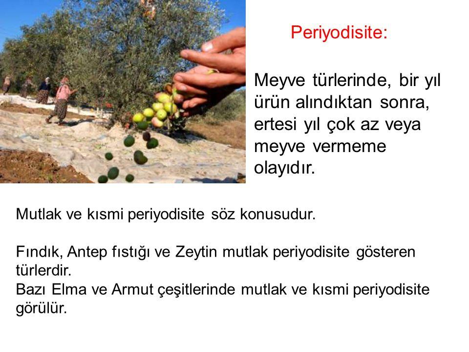 Meyve türlerinde, bir yıl ürün alındıktan sonra, ertesi yıl çok az veya meyve vermeme olayıdır. Periyodisite: Mutlak ve kısmi periyodisite söz konusud