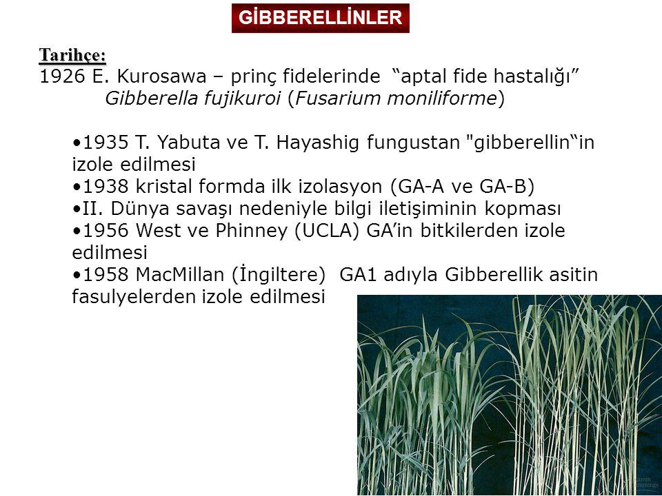 """GİBBERELLİNLER Tarihçe: 1926 E. Kurosawa – prinç fidelerinde """"aptal fide hastalığı"""" Gibberella fujikuroi (Fusarium moniliforme) 1935 T. Yabuta ve T. H"""