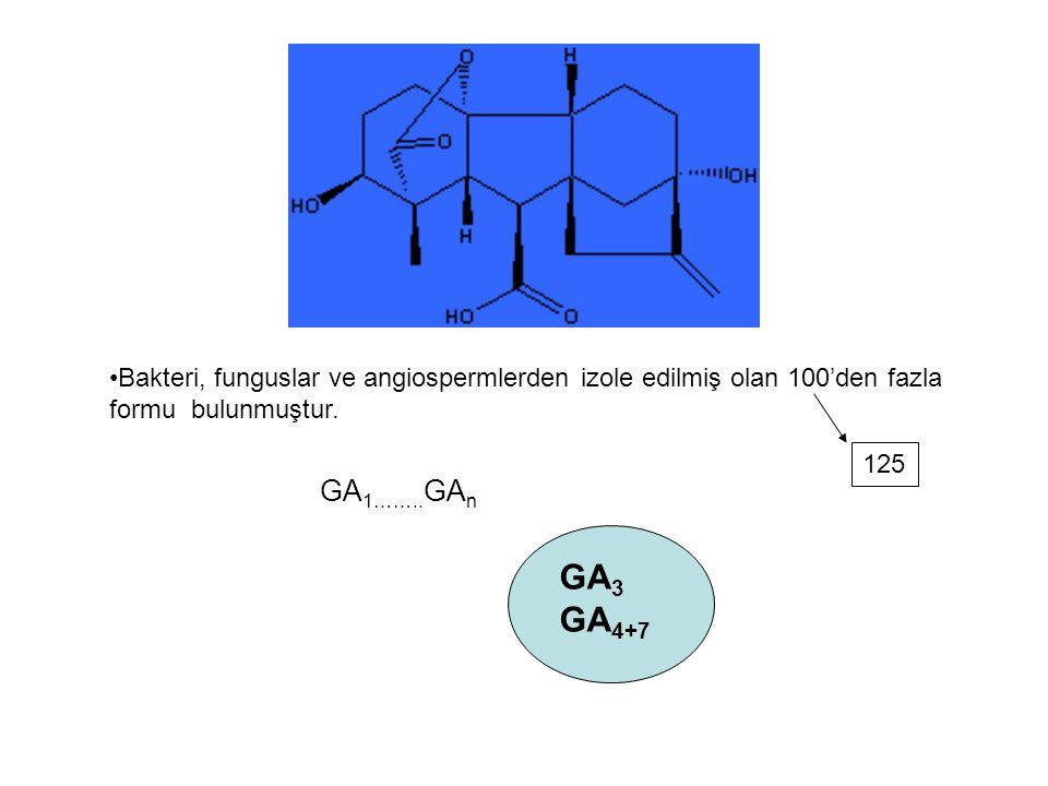 Bakteri, funguslar ve angiospermlerden izole edilmiş olan 100'den fazla formu bulunmuştur. GA 1…….. GA n GA 3 GA 4+7 125