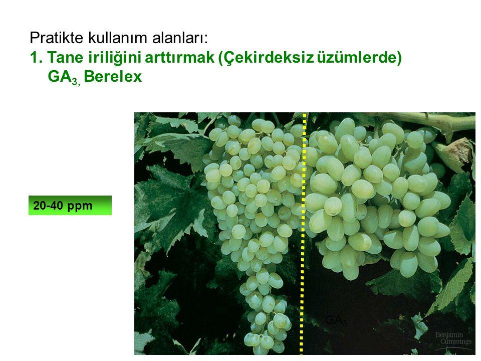 Pratikte kullanım alanları: 1. Tane iriliğini arttırmak (Çekirdeksiz üzümlerde) GA 3, Berelex 20-40 ppm GA 3