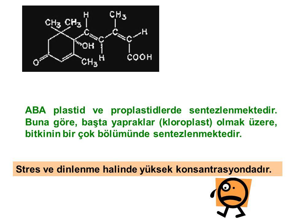 ABA plastid ve proplastidlerde sentezlenmektedir. Buna göre, başta yapraklar (kloroplast) olmak üzere, bitkinin bir çok bölümünde sentezlenmektedir. S