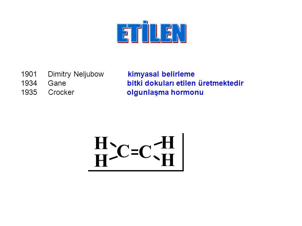 1901 Dimitry Neljubow kimyasal belirleme 1934 Gane bitki dokuları etilen üretmektedir 1935 Crocker olgunlaşma hormonu C C H H H H