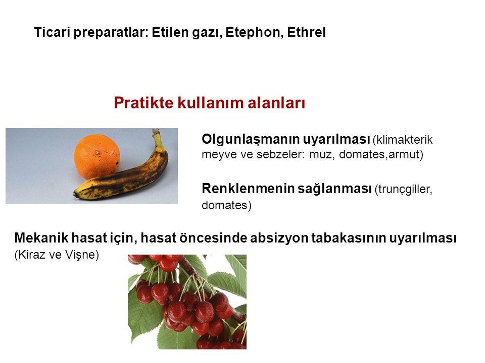 Pratikte kullanım alanları Olgunlaşmanın uyarılması (klimakterik meyve ve sebzeler: muz, domates,armut) Renklenmenin sağlanması (trunçgiller, domates)
