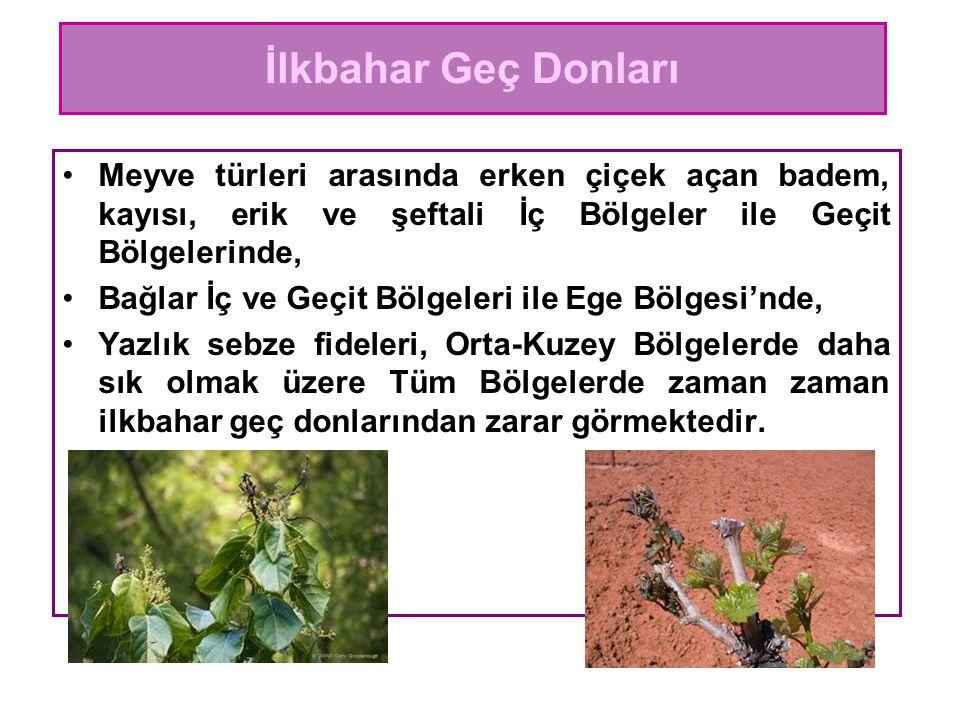 Meyve türleri arasında erken çiçek açan badem, kayısı, erik ve şeftali İç Bölgeler ile Geçit Bölgelerinde, Bağlar İç ve Geçit Bölgeleri ile Ege Bölges