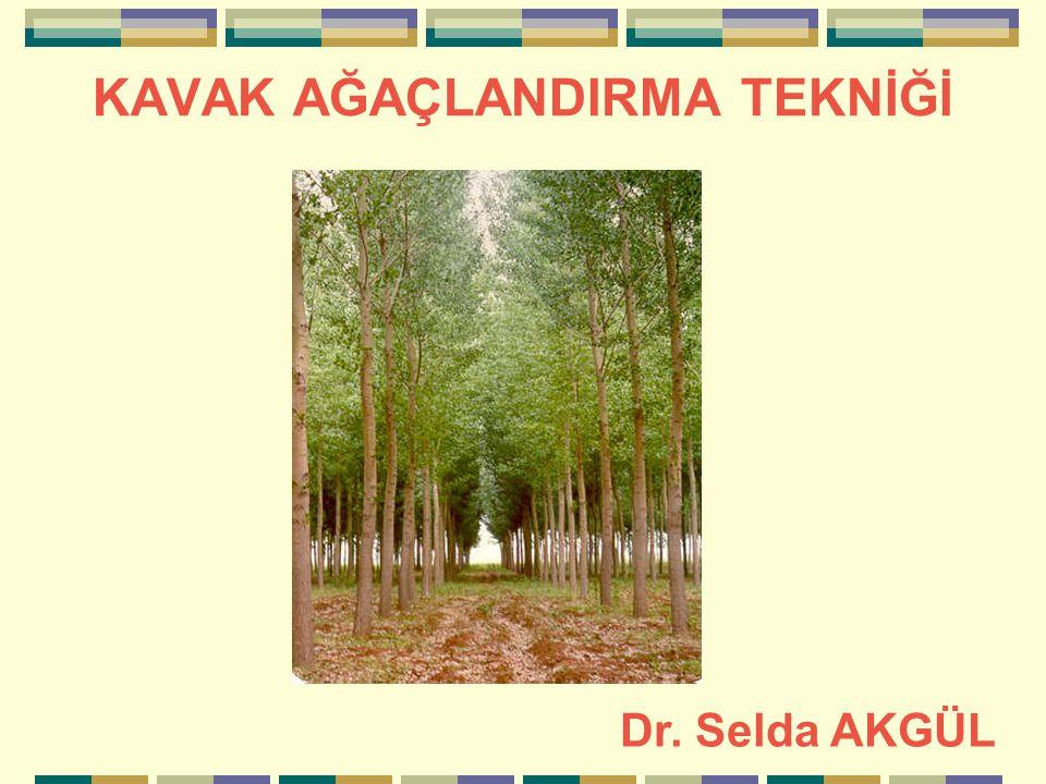 KAVAK AĞAÇLANDIRMA TEKNİĞİ Dr. Selda AKGÜL