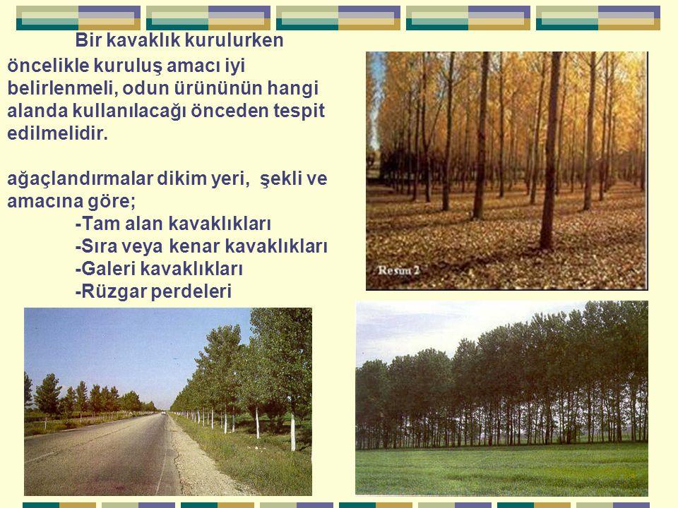 Bir kavaklık kurulurken öncelikle kuruluş amacı iyi belirlenmeli, odun ürününün hangi alanda kullanılacağı önceden tespit edilmelidir.
