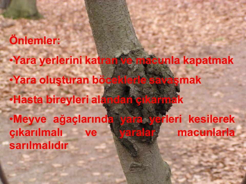 Önlemler: Yara yerlerini katran ve macunla kapatmak Yara oluşturan böceklerle savaşmak Hasta bireyleri alandan çıkarmak Meyve ağaçlarında yara yerleri