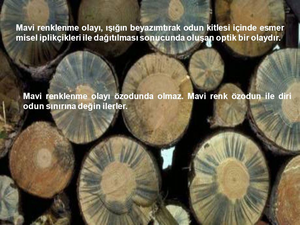 Mavi renklenme olayı, ışığın beyazımtırak odun kitlesi içinde esmer misel iplikçikleri ile dağıtılması sonucunda oluşan optik bir olaydır. Mavi renkle