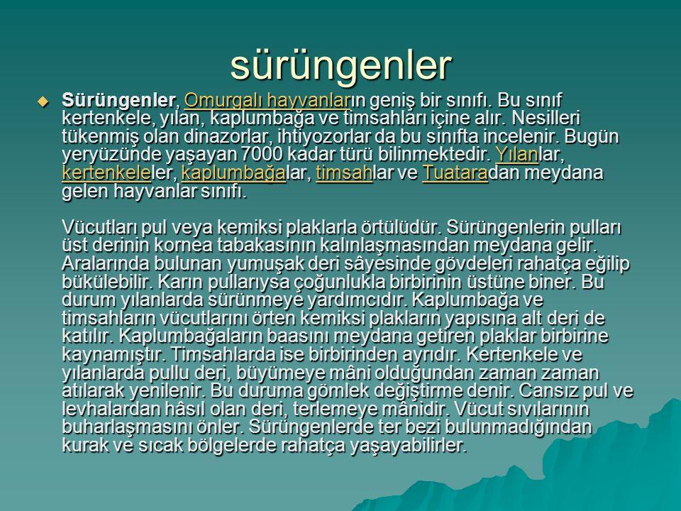 sürüngenler  Sürüngenler, Omurgalı hayvanların geniş bir sınıfı.