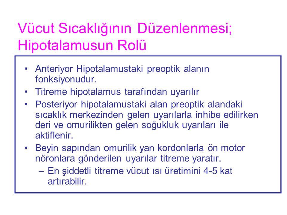 Vücut Sıcaklığının Düzenlenmesi; Hipotalamusun Rolü Anteriyor Hipotalamustaki preoptik alanın fonksiyonudur. Titreme hipotalamus tarafından uyarılır P