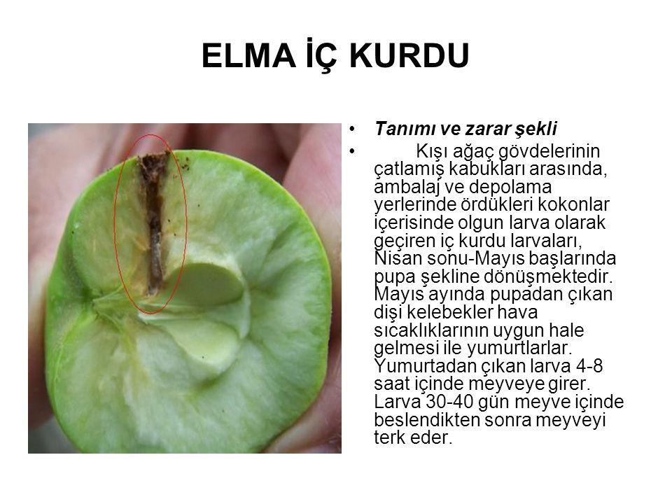 MÜCADELESİ Kültürel Önlemler: Elma ağaçlarının dibine dökülen meyveler toplanıp uzaklaştırılmalı, ambalaj ve depolama yerleri bahçe kenarına kurulmamalıdır.