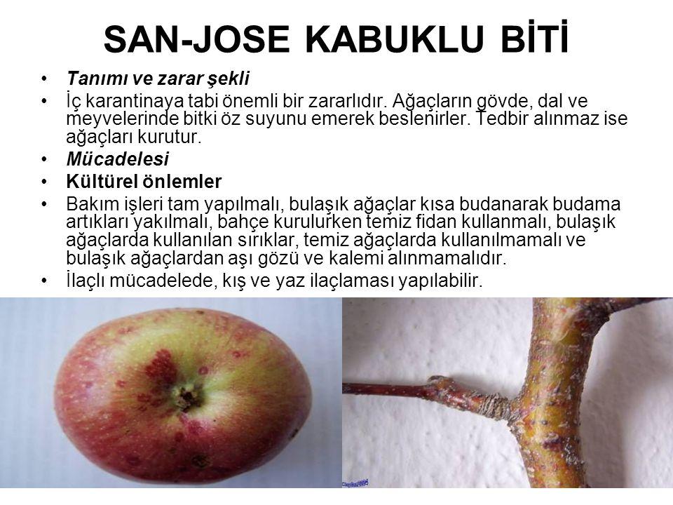 SAN-JOSE KABUKLU BİTİ Tanımı ve zarar şekli İç karantinaya tabi önemli bir zararlıdır. Ağaçların gövde, dal ve meyvelerinde bitki öz suyunu emerek bes