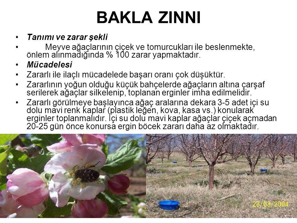 BAKLA ZINNI Tanımı ve zarar şekli Meyve ağaçlarının çiçek ve tomurcukları ile beslenmekte, önlem alınmadığında % 100 zarar yapmaktadır. Mücadelesi Zar