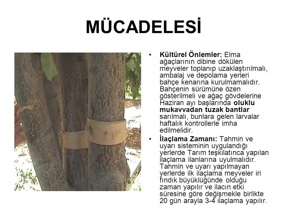 MÜCADELESİ Kültürel Önlemler: Elma ağaçlarının dibine dökülen meyveler toplanıp uzaklaştırılmalı, ambalaj ve depolama yerleri bahçe kenarına kurulmama