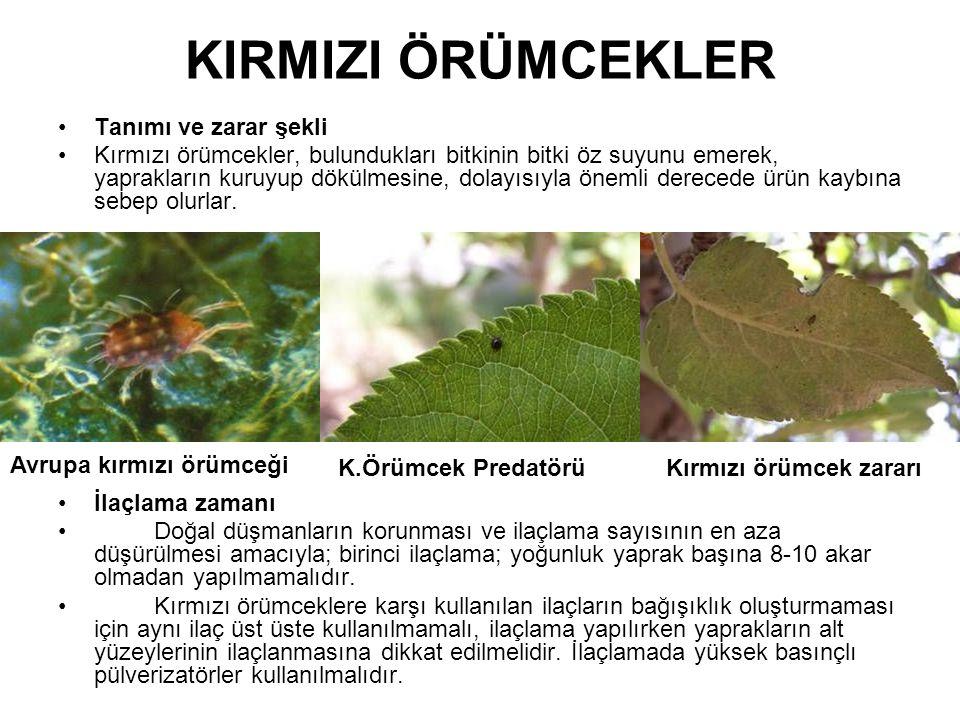 KIRMIZI ÖRÜMCEKLER Tanımı ve zarar şekli Kırmızı örümcekler, bulundukları bitkinin bitki öz suyunu emerek, yaprakların kuruyup dökülmesine, dolayısıyl