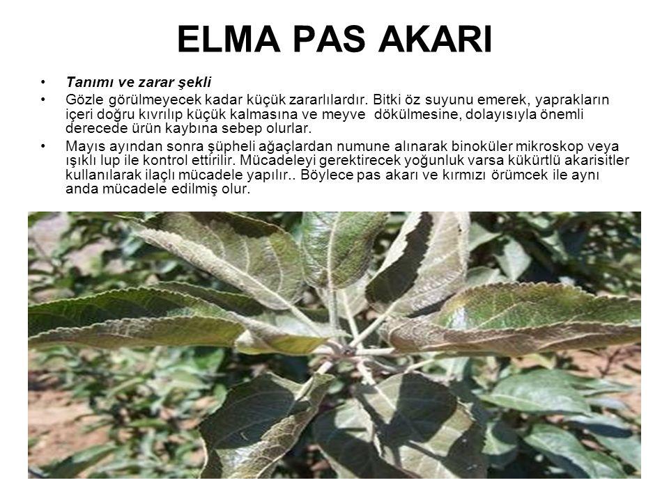 ELMA PAS AKARI Tanımı ve zarar şekli Gözle görülmeyecek kadar küçük zararlılardır. Bitki öz suyunu emerek, yaprakların içeri doğru kıvrılıp küçük kalm