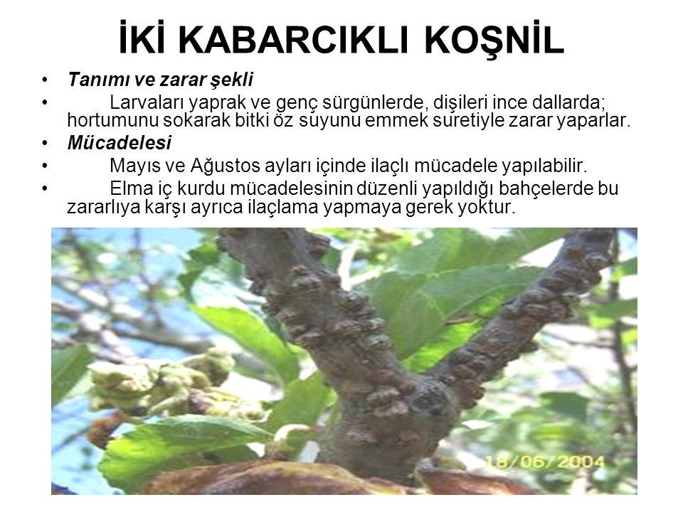 İKİ KABARCIKLI KOŞNİL Tanımı ve zarar şekli Larvaları yaprak ve genç sürgünlerde, dişileri ince dallarda; hortumunu sokarak bitki öz suyunu emmek sure