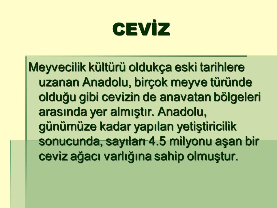 CEVİZ Meyvecilik kültürü oldukça eski tarihlere uzanan Anadolu, birçok meyve türünde olduğu gibi cevizin de anavatan bölgeleri arasında yer almıştır.