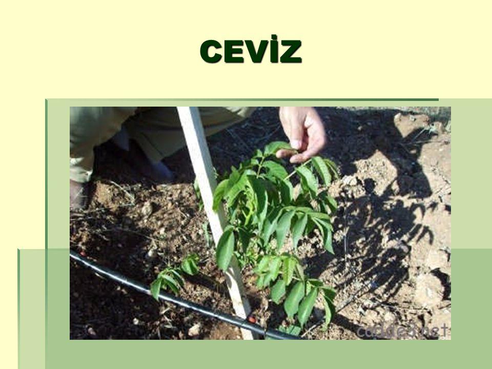 Yaprakbiti türlerinin çok sayıda doğal düşmanı bulunmakta ve bunlar zararlıyı genelde baskı altına alabilmektedir.