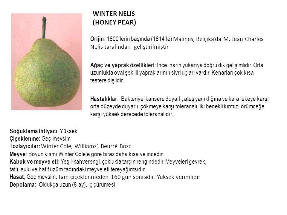 WINTER NELIS (HONEY PEAR) Orijin : 1800'lerin başında (1814'te) Malines, Belçika'da M. Jean Charles Nelis tarafından geliştirilmiştir Ağaç ve yaprak ö