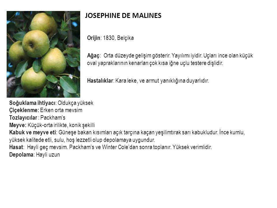 JOSEPHINE DE MALINES Orijin : 1830, Belçika Ağaç : Orta düzeyde gelişim gösterir. Yayılımı iyidir. Uçları ince olan küçük oval yapraklarının kenarları