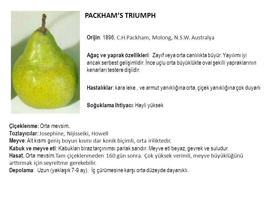 PACKHAM'S TRIUMPH Orijin : 1896, C.H.Packham, Molong, N.S.W. Australya Ağaç ve yaprak özellikleri : Zayıf veya orta canlılıkta büyür. Yayılımı iyi anc