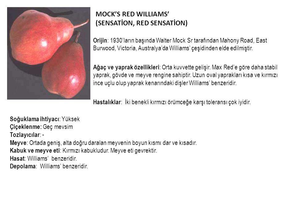 MOCK'S RED WILLIAMS' (SENSATİON, RED SENSATİON) Orijin : 1930'ların başında Walter Mock Sr tarafından Mahony Road, East Burwood, Victoria, Australya'd