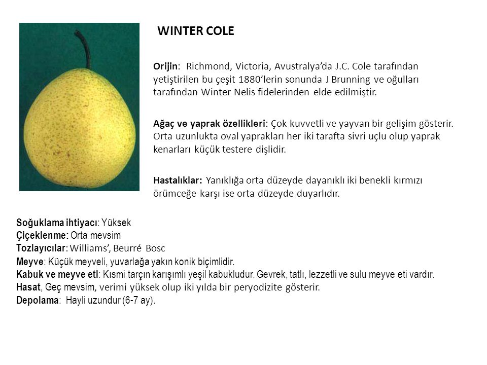 WINTER COLE Orijin: Richmond, Victoria, Avustralya'da J.C.