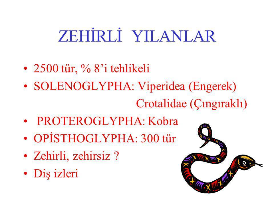 ZEHİRLİ YILANLAR 2500 tür, % 8'i tehlikeli SOLENOGLYPHA: Viperidea (Engerek) Crotalidae (Çıngıraklı) PROTEROGLYPHA: Kobra OPİSTHOGLYPHA: 300 tür Zehirli, zehirsiz .