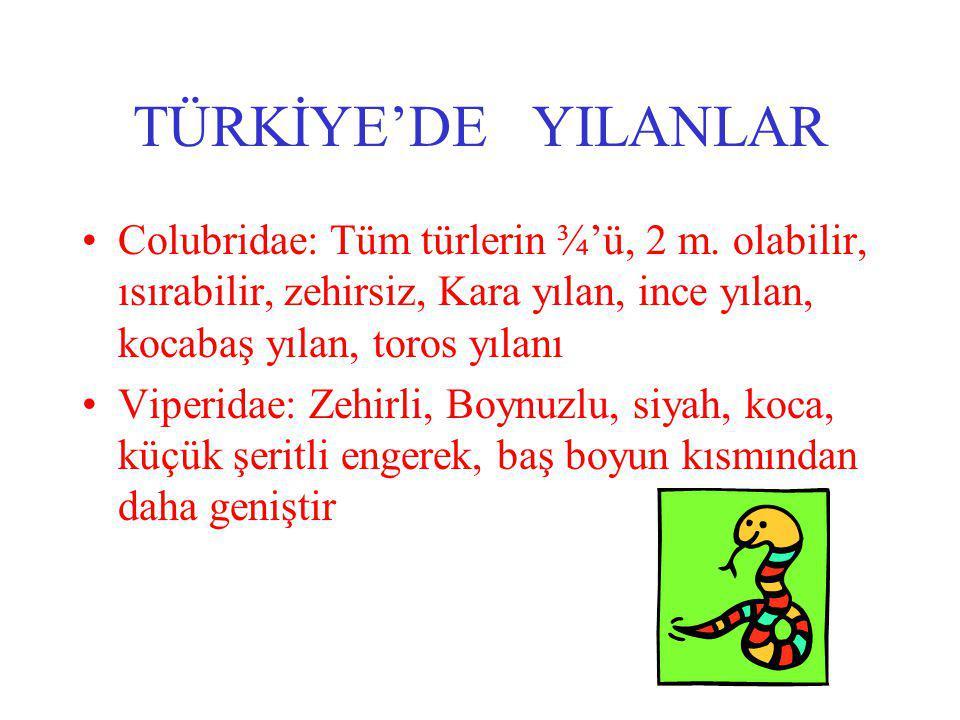 TÜRKİYE'DE YILANLAR Colubridae: Tüm türlerin ¾'ü, 2 m.