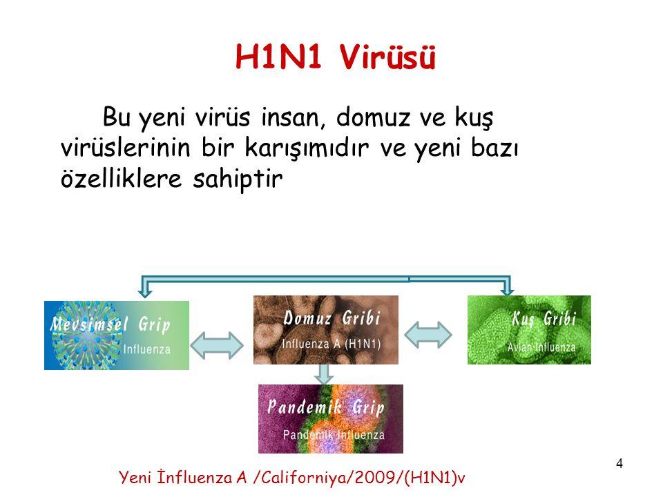 4 H1N1 Virüsü Bu yeni virüs insan, domuz ve kuş virüslerinin bir karışımıdır ve yeni bazı özelliklere sahiptir Yeni İnfluenza A /Californiya/2009/(H1N1)v