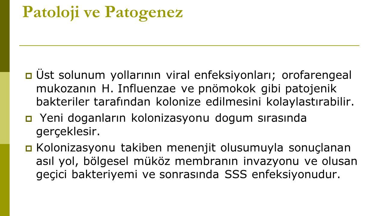 Patoloji ve Patogenez  Üst solunum yollarının viral enfeksiyonları; orofarengeal mukozanın H.